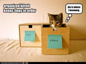 funny-pictures-kitten-is-organized1